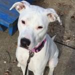 Dulče je gluvi pas koji je spasao svoju porodicu od trovanja ugljen-monoksidom!