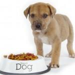 7 stvari u kojima vlasnici greše prilikom ishrane pasa!