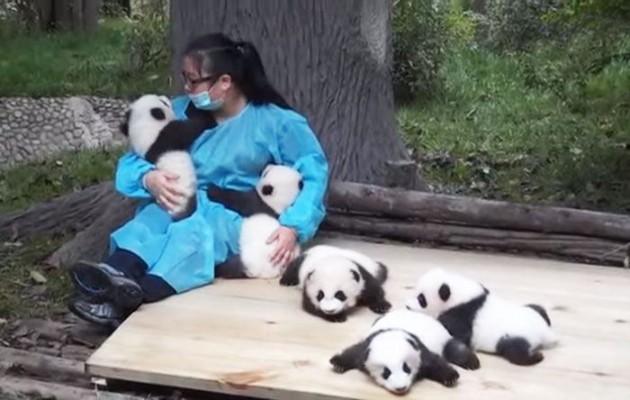grlite pande petface