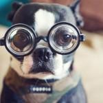 Da li i ljubimcima slabi vid sa godinama?