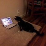 PRETUŽNO: Mačka ne može da preboli smrt svog najboljeg prijatelja – PSA!