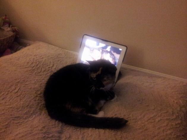 mačka ne može da preboli smrt petface