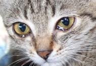 mačke plaču petface