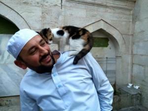 mačke sa ulica petface