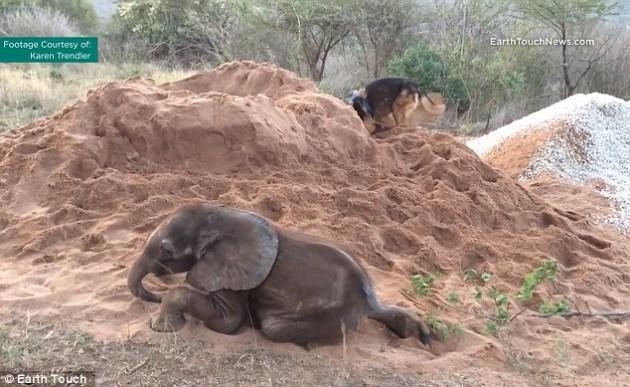 napušteno slonče petface