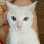 oči kod mačaka petface