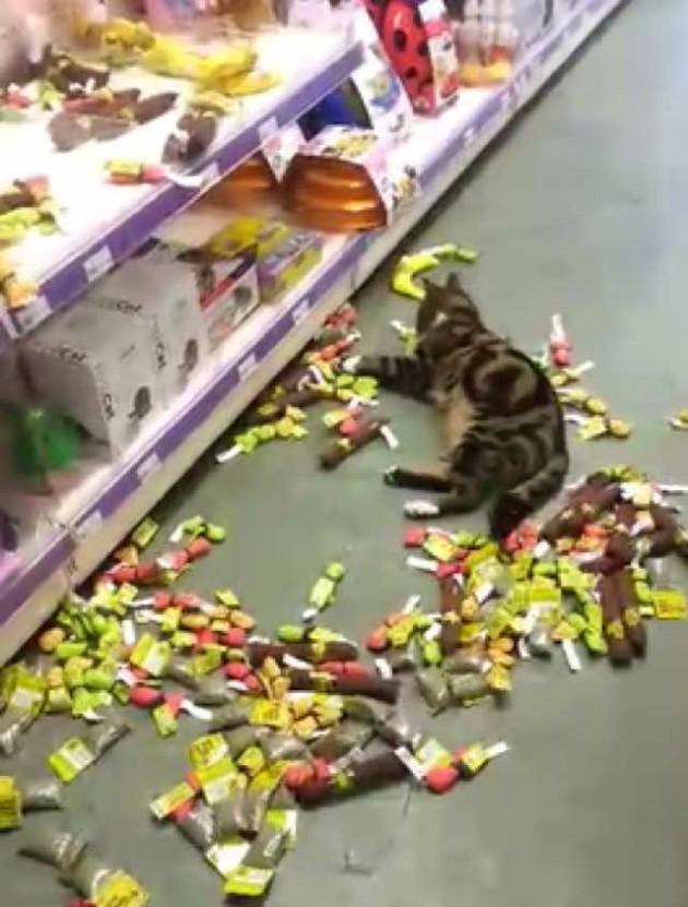 odbegla mačka petface