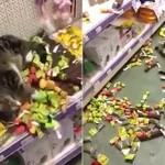 Odbegla mačka pronađena je u prodavnici za ljubimice okružena igračakama!