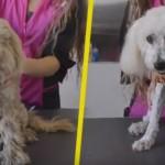 EMOTIVNO: Nakon transformacije, ovaj napušteni pas je udomljen! (VIDEO)