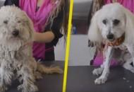 pas je udomljen petface