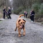 KAKAV TAKMIČAR: Ovaj pas je istrčao polu-maraton i to SLUČAJNO!