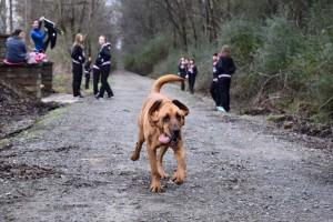 pas koji je istrčao polu-maraton petface