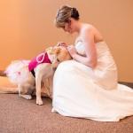 SAVRŠENO: Ovaj pas je na venčanju svoje vlasnice imao POSEBNU ULOGU!