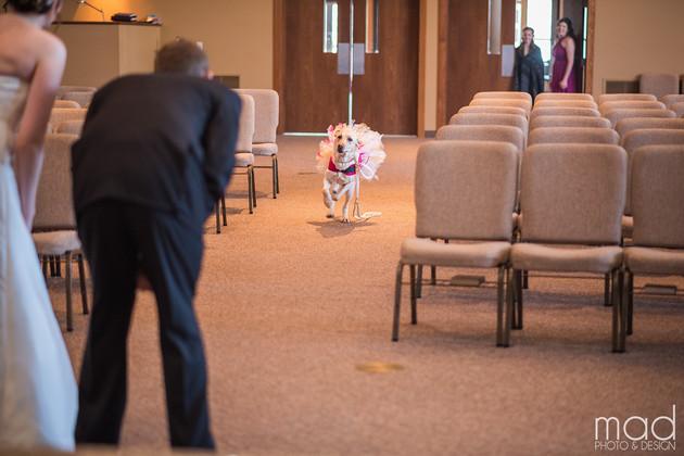 pas na venčanju svoje vlasnice petface