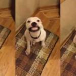 VIDEO: Ovaj pas se osmehuje svaki put kad mu fotograf uputi dve reči!