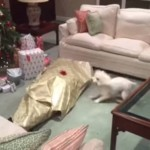 Ovaj vlasnik je svom psu poklonio najoriginalniji novogodišnji poklon – sebe! (VIDEO)