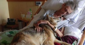 psi tumače ljudske emocije petface