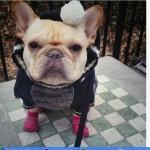 NJIMA NIKAD NIJE ZIMA: Ovih 16 pasa u džemperima ulepšaće vam dan!
