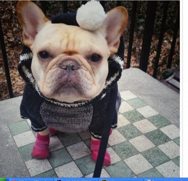 pasa u džemperima petface