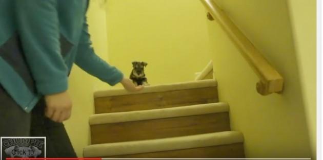 uči da siđe niz stepenice petface
