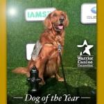 ČOVEKOV NAJBOLJI PRIJATELJ: Dodeljene svetske nagrade psima širom sveta!
