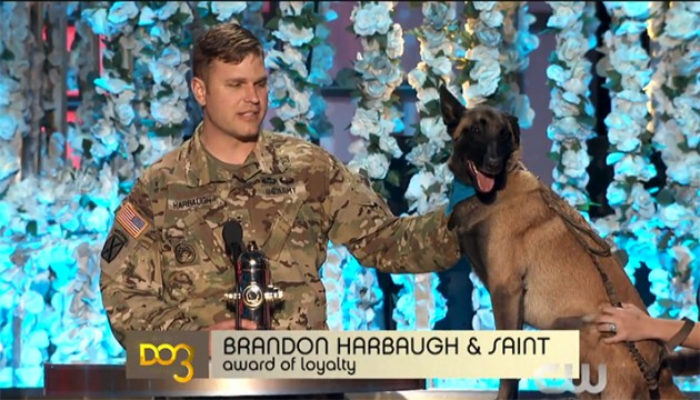 svetske nagrade psima petface