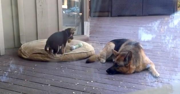 štene BAŠ ne želi da spava petface