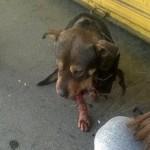 BRAVO: Okupljeni koji traže pravdu za ubistvo psa PONOVO protestuju – sada protiv nasilja nad decom!