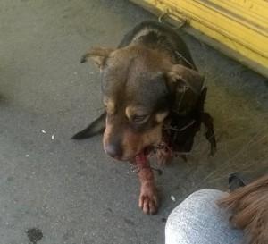 pravdu za ubistvo psa petface
