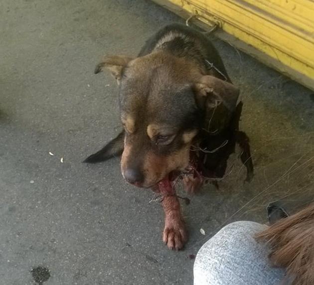 ubistvo psa petardom petface