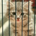 8 razloga zašto nikad ne bi trebalo da udomite mačku sa ulice!