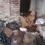 ZAJEČAR: Psi, koje vlasnik tuče, a komšije čekaju da otruju – TRAŽE POMOĆ!