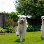 Kako da i vaš pas postane OMILJENI KOMŠIJA?