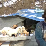 DISKRETNI HEROJ: Ova žena je spasila i zbrinula preko 200 pasa! (VIDEO)