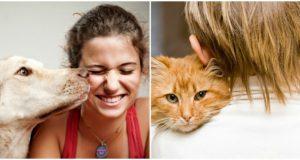 mačke ili psi petface