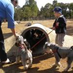 NIŠLIJE, od sutra uživajte sa ljubimcima u najnovijem Parku za pse!