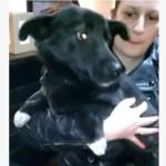 UŽICE: Spašen pas koji je bio zaglavljen u mreži koja štiti od odrona!
