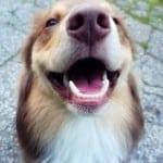 Da li ste znali: U usnoj duplji psa može živeti i 600 bakterija!