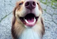 U usnoj duplji psa petface