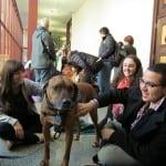 Učenici u Sremskoj Mitrovici pokrenuli akciju – USVOJI PSA, POKAŽI HUMANOST!