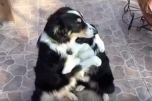 Zagrljaj ova dva psa petface