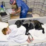 Ovaj pas se ne razdvaja od autističnog dečaka, čak ni dok je mališan u bolnici!