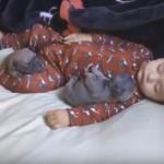 NAJSLAĐI PRIZOR IKADA: Beba spava sa dva šteneta mopsa! (VIDEO)