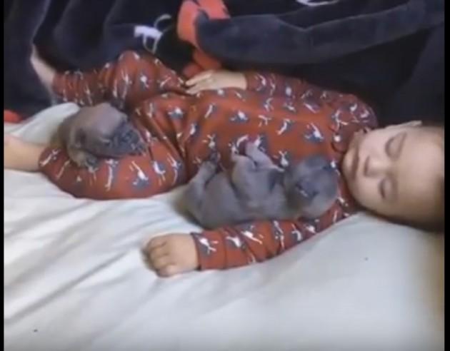 Beba spava sa dva šteneta mopsa petface