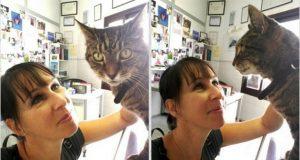žena se udala za svoje mačke petface