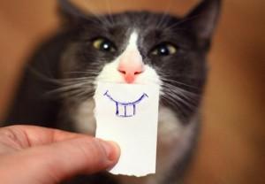 činjenica o mačkama PETFACE