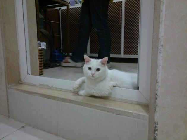 izgubljene mačke petface