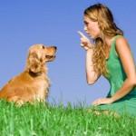 Da li znate: Zašto psi laju?