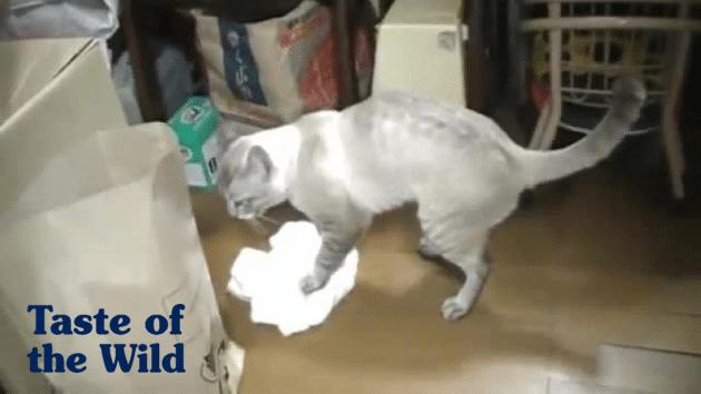 mačka briše pod petface