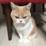 mrzovoljna mačka petface